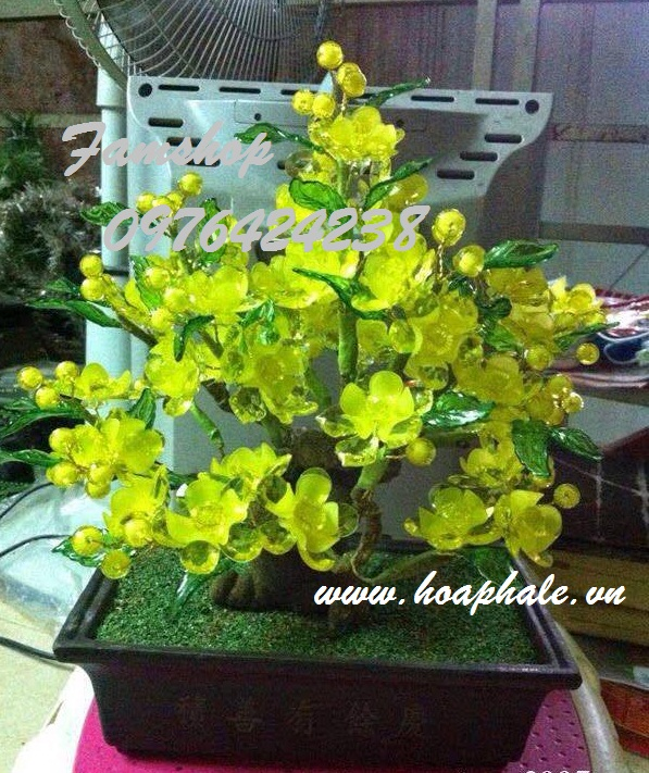 Goc bonsai mai dao o Nguyen Trung Nhan
