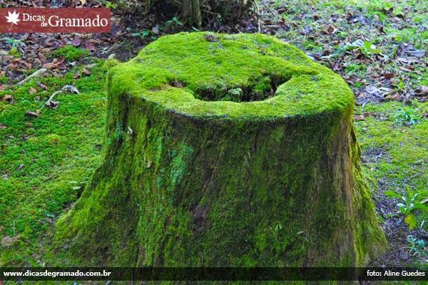 Tronco de árvore no Lago Negro - Gramado/RS