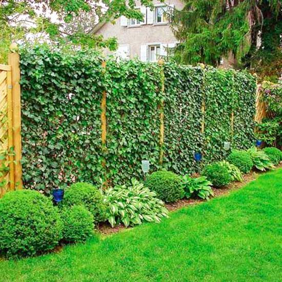 Inspirasi pagar dengan tanaman