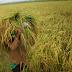Swasembada dengan Membangun Kesejahteraan Petani