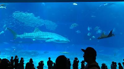 Whale Shark Japanese Ocean Churaumi Aquarium Okinawa Handmade Glass Fused Sharon Warren FluterbyButterfly FlutterbyFoto Bullseye Whaleshark