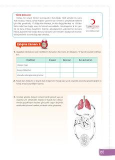 6. Sınıf Fen Bilimleri Ders Kitabı Cevapları Sevgi Yayınları Sayfa 65