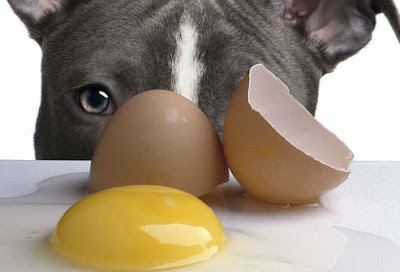 Dog looking at a raw egg on a kitchen counter