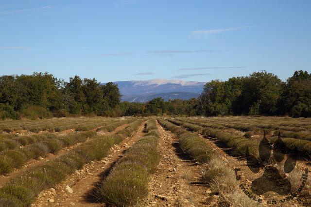 Luberon-plateau-claparedes-mont-ventoux-lavande