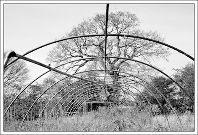 decline, plant nursery, derelict, redevelopment, Essex, Derek Anson, photographer, black and white, monochrome, Leica, 50mm, f2 Summicron,