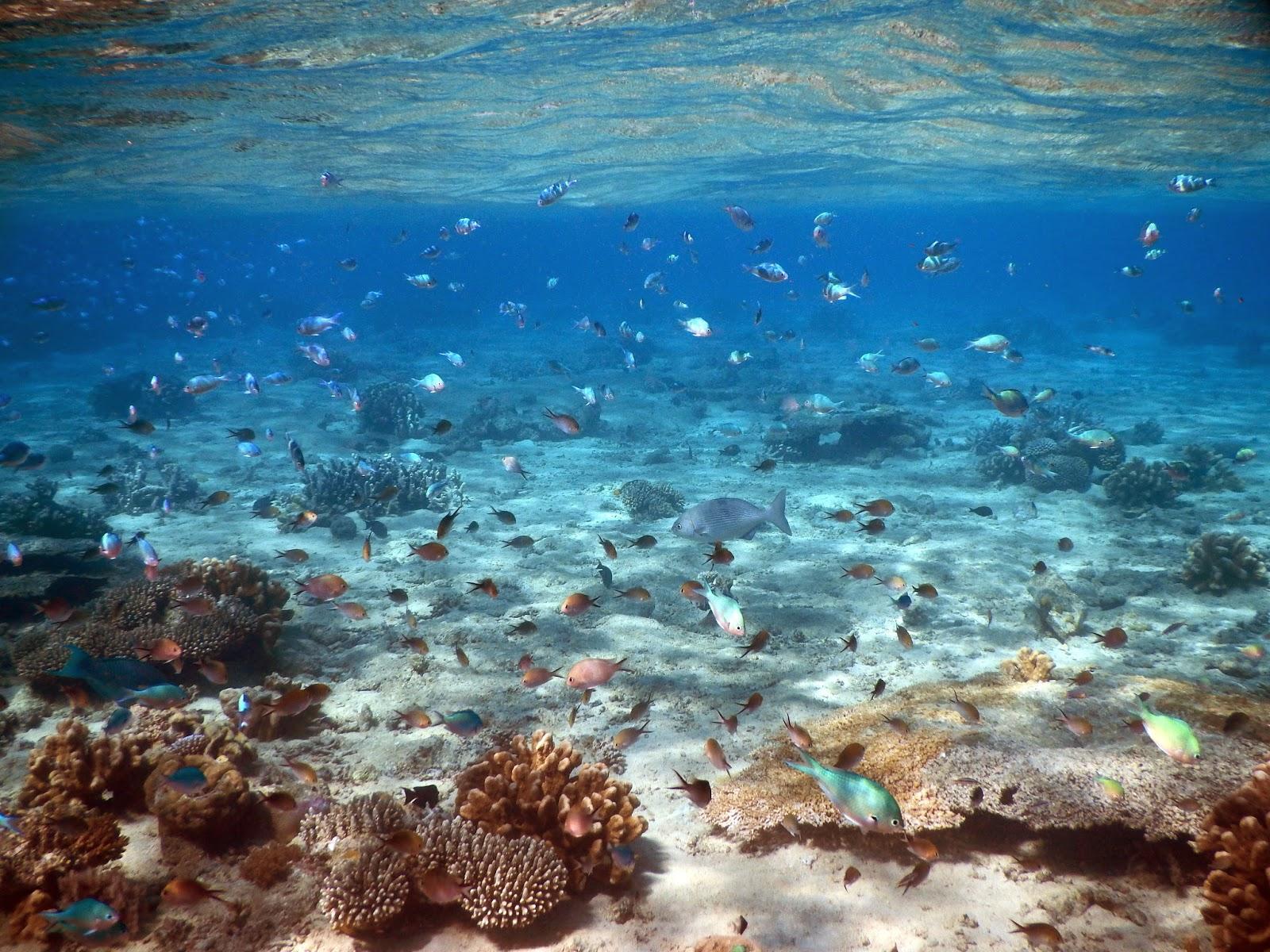 Photo sous marine passe en S Mayotte