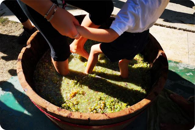 fattorie didattiche pigiatura uva con i piedi