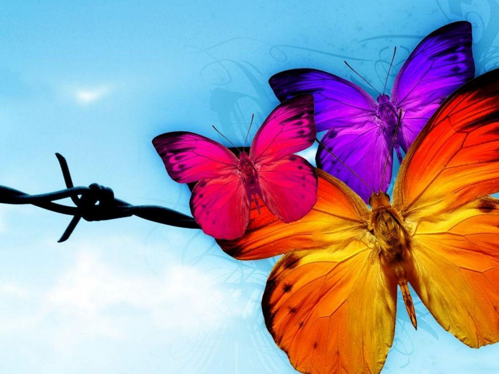 Butterfly Wallpaper Rainbow Butterfly Wallpaper Hd: Butterfly HD Wallpapers