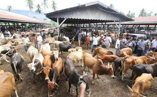 pelaku pasar hewan ternak