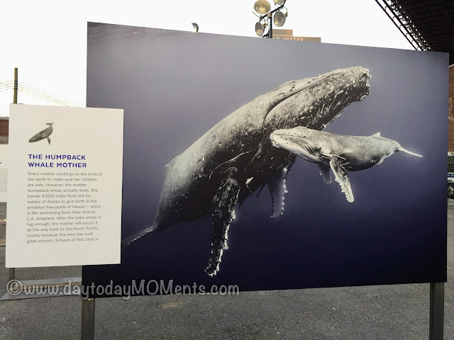free exhibit in Brooklyn Bridge Plaza