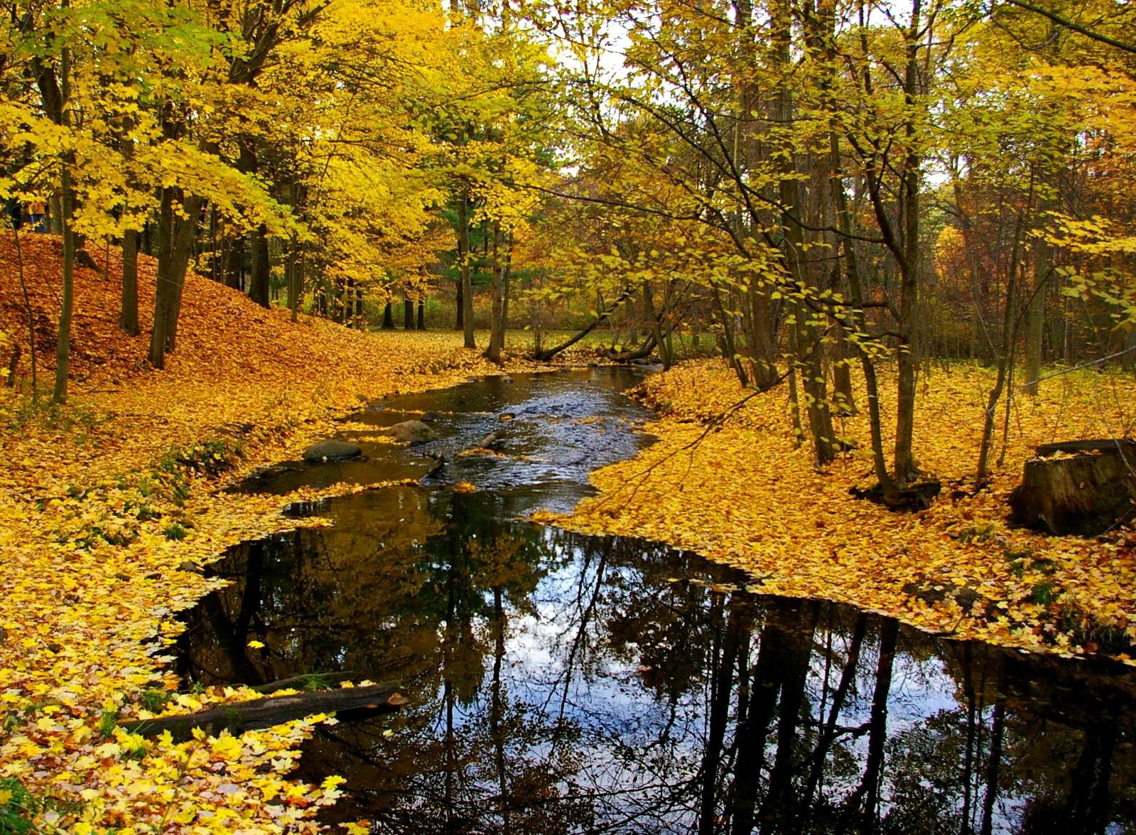 Yapraklar neden sararır ve ağaca nasıl yardımcı olur