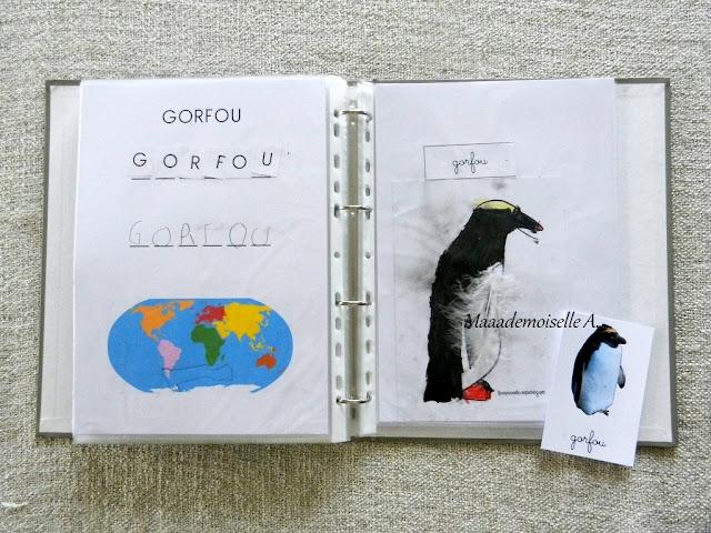 || Activité autour des cartes de nomenclature : Représenter et comparer des animaux (gorfou)