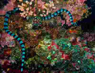 Foto Ular Laut