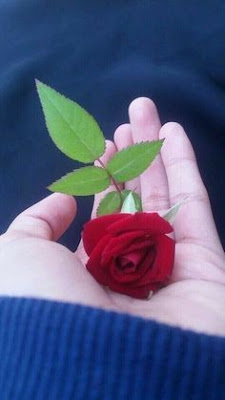the girl taken red rose in hand