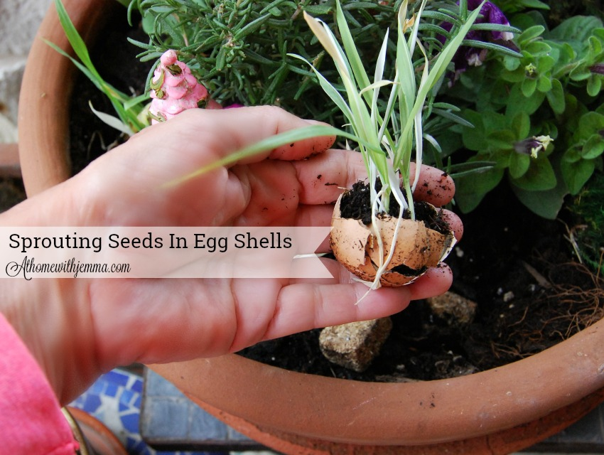 Spring-gardening-sprouting-grass-seeds-eggshells-kid-project