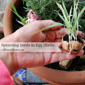 Sprouting Seedlings In Egg Shells