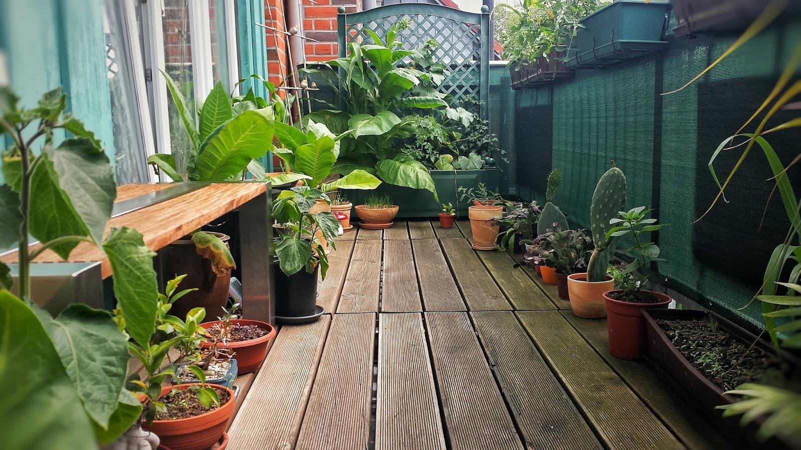 gemüse anbauen balkon | kräuter und gemüse zum anbauen und ernten