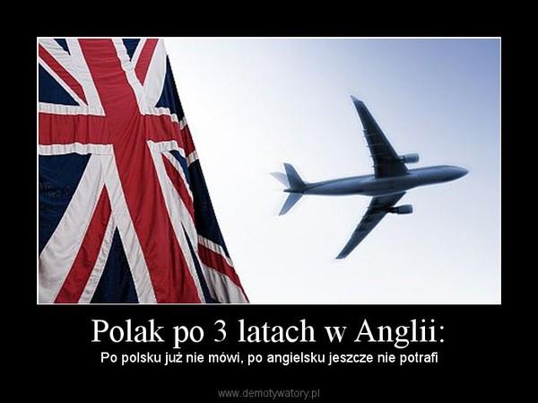 Do not cross this łańcuch czyli Polacy w Anglii