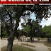 Número seis de la revista La Gatera de la Villa