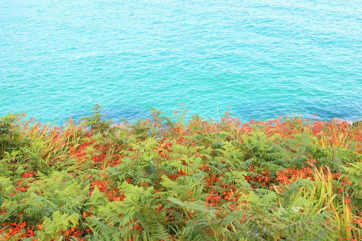 Flowers of Cornwall | Porthcurno