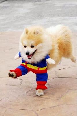 [Image: lol+animals+in+costume.jpg]