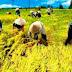 Unsika Karawang akan Perluas Fakultas Pertanian