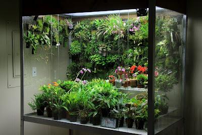 Orchids In Bloom Rebuilt Orchidarium