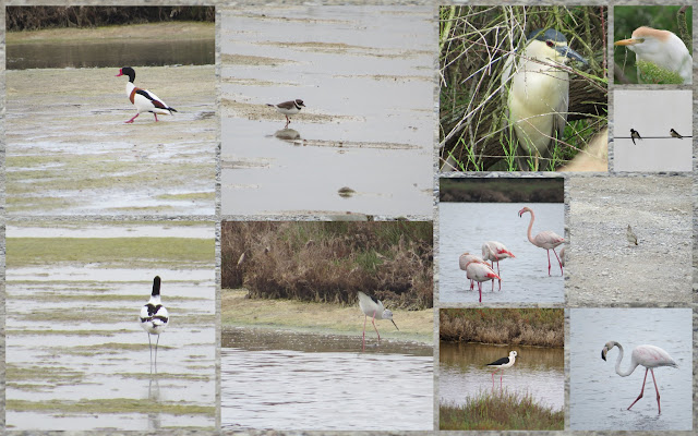 Birds of Languedoc including shelducks, egrets, herons, black-necked stilts