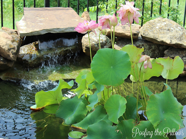 backyard pond, ponds, water features, koi pond, fish pond, water garden, waterfall, water lilies, water lotus
