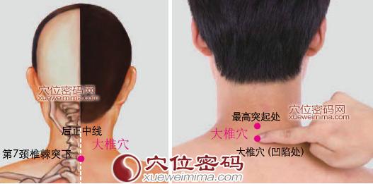大椎穴位 | 大椎穴痛位置 - 穴道按摩經絡圖解 | Source:xueweitu.iiyun.com