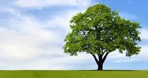 30 Soal Dan Pembahasan Tentang Pertumbuhan Dan Perkembangan Tumbuhan Essay Dan Pilgan