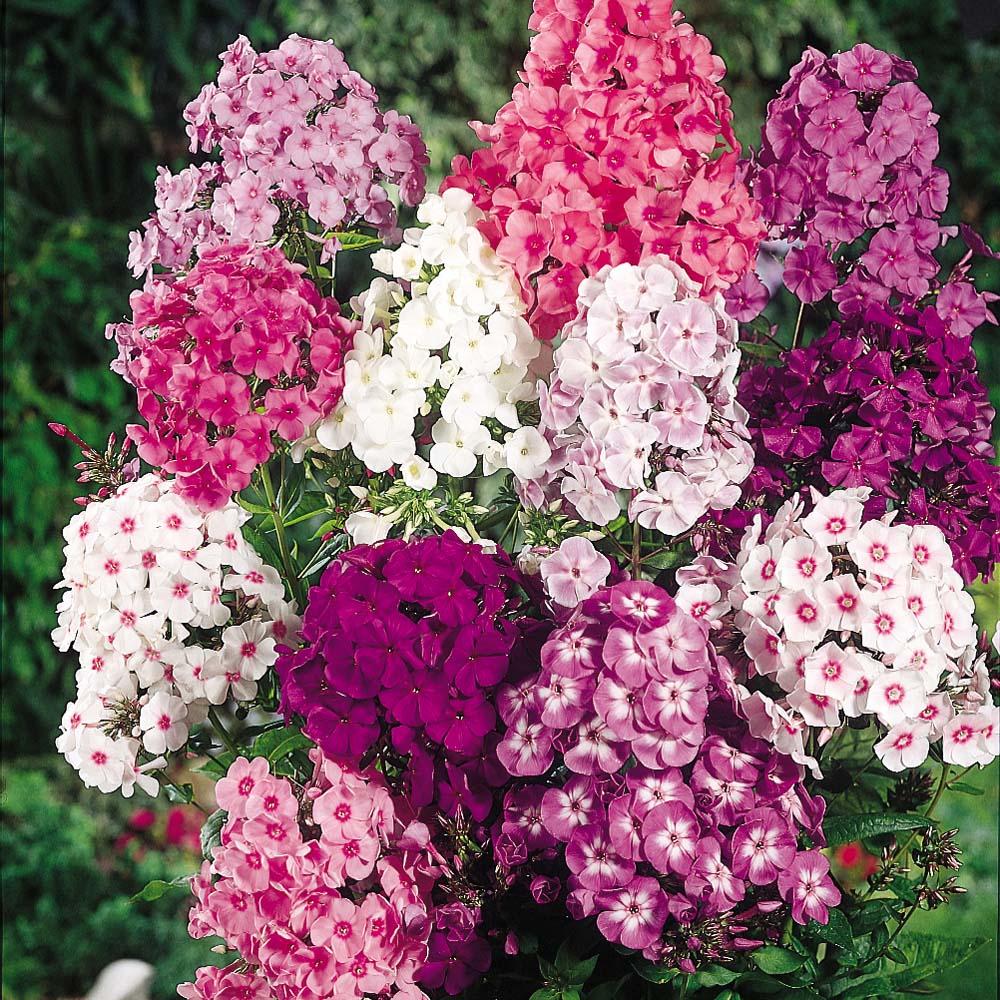 Tarım Siteniz: Çok Yıllık Çiçek Türleri