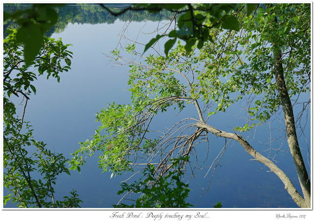 Fresh Pond: Deeply touching my Soul...