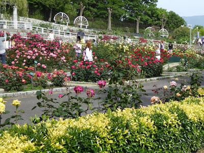 花博記念公園鶴見緑地のバラ園