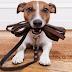 Αυτός είναι ο νέος νόμος για τα σκυλιά! Τι πρέπει να ξέρετε;