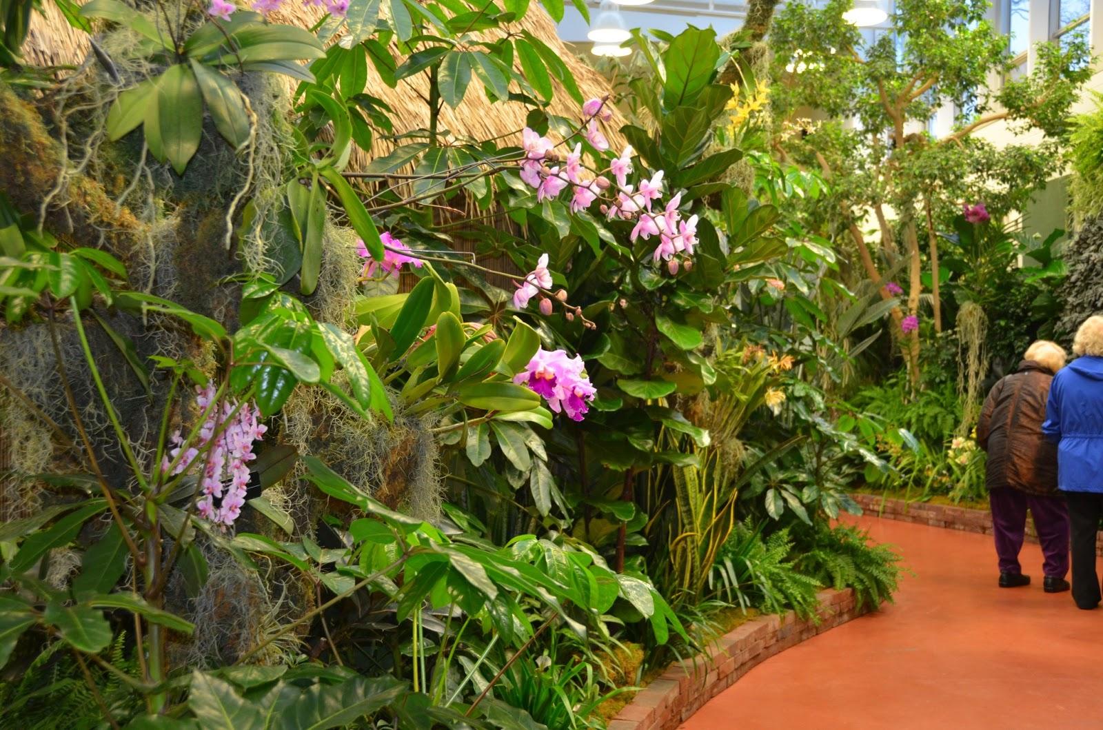 Orchids on display at missouri botanical garden flour - Orchid show missouri botanical garden ...