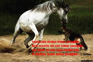 abdurrahim karakoç, altın sözler, at, can, ceset, çocuklara öğütler, dersler, iman, imansız, it, köpek, öğüt, ölüm, resimli mesajlar, resimli sözler, ruh, şiir, çocuklara, altın sözler, tavsiyeler, tay,
