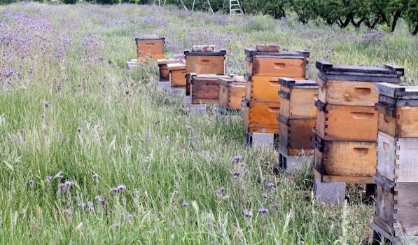 Καθαρίζουμε τις κυψέλες απο τα χόρτα: Γρήγορος τρόπος για να μην μας επιτίθούν οι μέλισσες