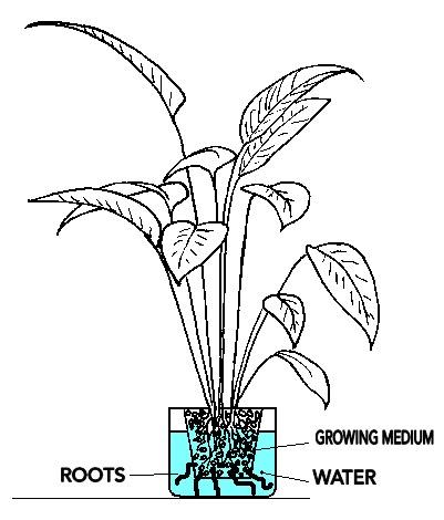 Hydroponics & Organics in Cebu