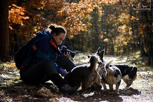 welsh corgi, welsh corgi cardigan, corgi, podróże, podróże z psem, z psem w podróży, wakacje z psem, życie z psem, z psem przez świat