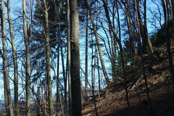 slovénie lac bled forêt