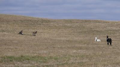 Frenchville, Saskatchewan, animals, Driscol Lake