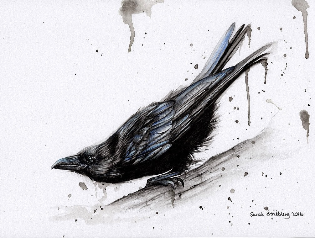 11-Raven-Sarah-Stribbling-A-Wildlife-and-Pet-Portrait-Artist-www-designstack-co
