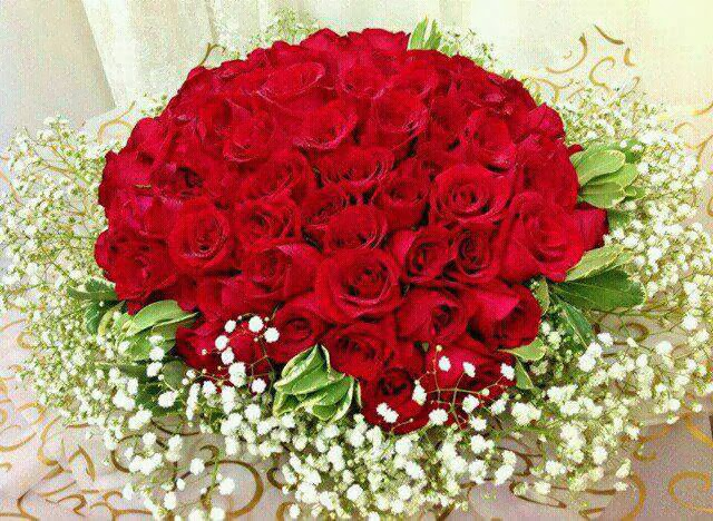 red rose family collection image