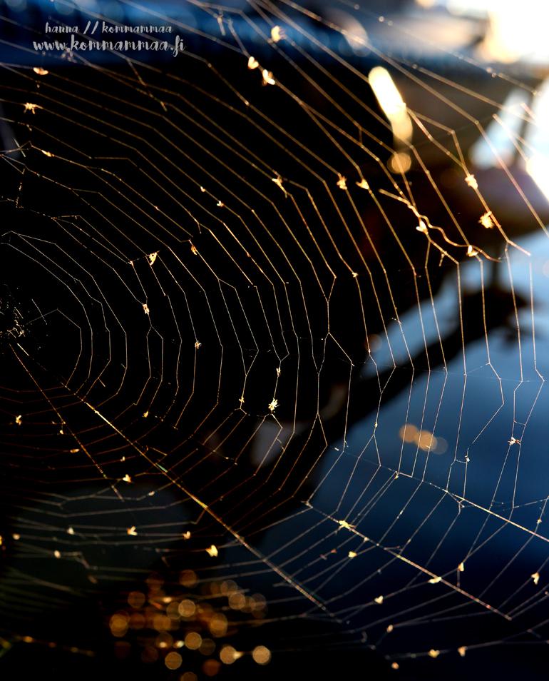 hämähäkin seitti ilta-auringossa