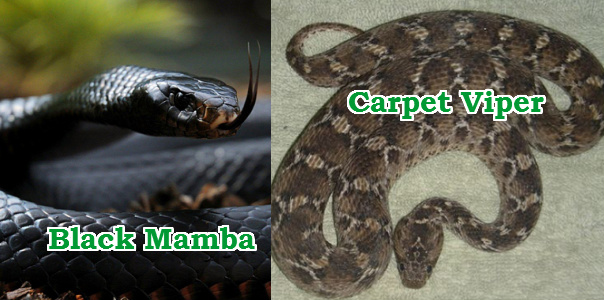 snake invasion jos plateau
