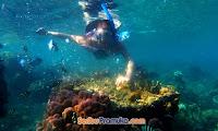 wisata open trip pulau hararpan