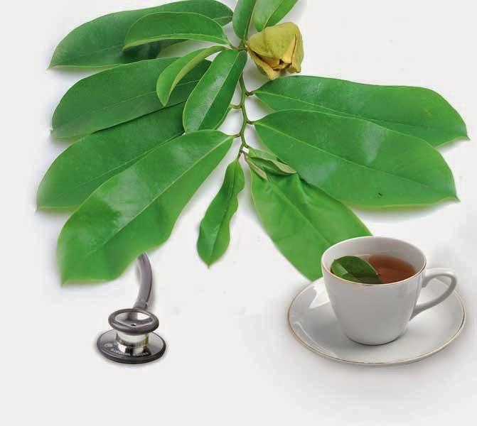 pengobatan kanker hati dengan herbal