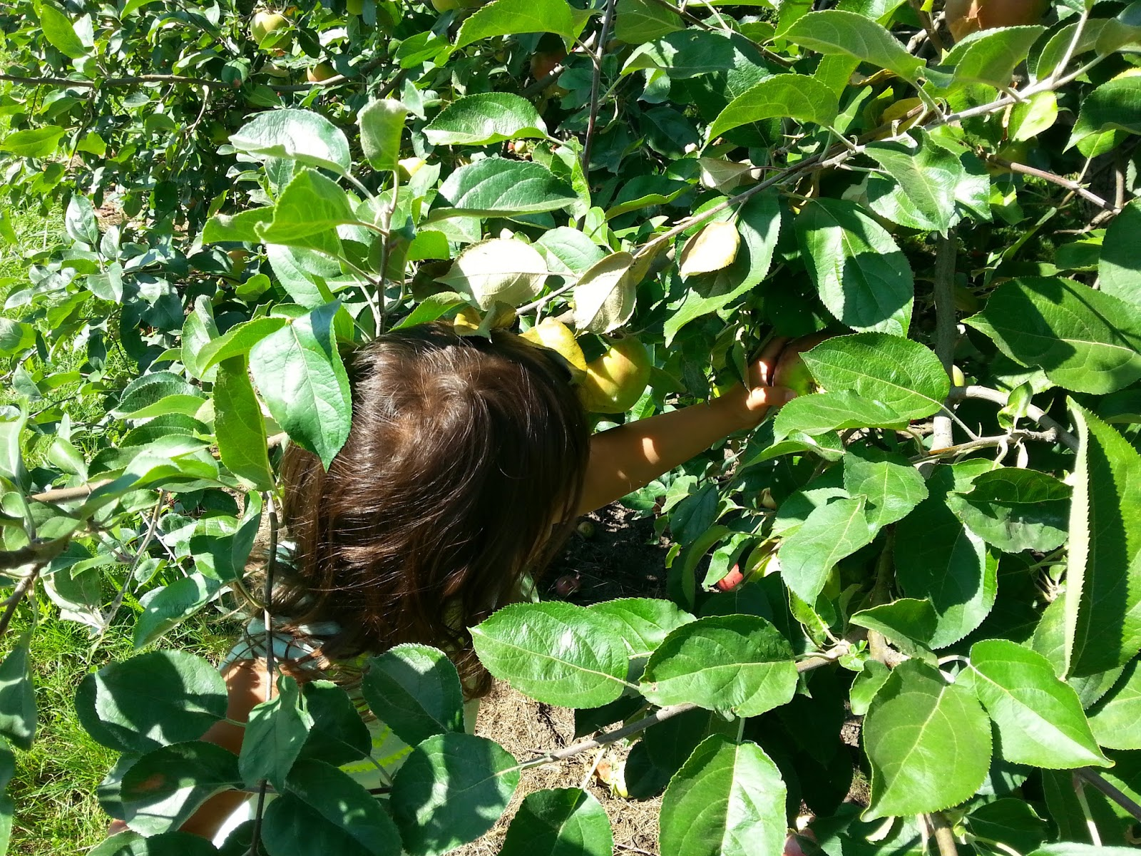 what to do in southern oregon fall is for apple picking