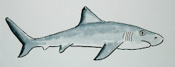 shark draw easy worksheet drawing worksheets artist young